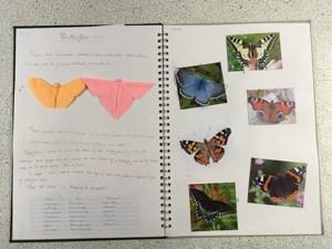 Mirain brown origami butterflies 1